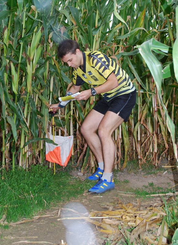 Orienteering in a cornfield (maize)